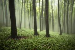 Mooi bos in de lente met mist, groene installaties en bloemen royalty-vrije stock afbeeldingen