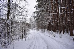 Mooi bos in de sneeuw, sneeuwweg, de winter rond, de wintersprookje stock fotografie
