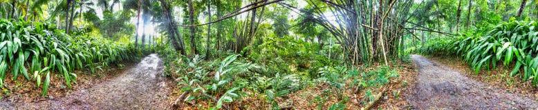 Mooi bos in Jamaïca stock foto