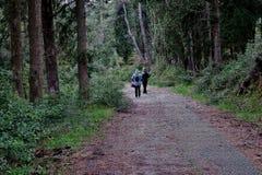 Mooi bos met een weg die de toeristen lopen stock foto's
