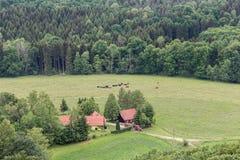 Mooi bos Saksisch Zwitserland Royalty-vrije Stock Afbeeldingen