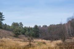 Mooi boslandschap Autumn Trees in het Bos stock fotografie