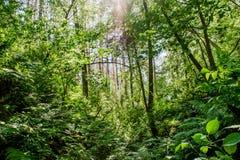 Mooi boslandschap met groene varens, bomen en struiken stock afbeeldingen