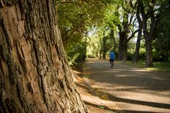 Mooi Botanisch Park Royalty-vrije Stock Foto's