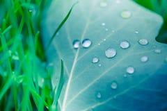 Mooi breen blad en ochtenddauwdalingen De achtergrond van de aardtextuur Groen blad en groen milieu stock afbeelding