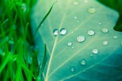 Mooi breen blad en ochtenddauwdalingen De achtergrond van de aardtextuur Groen blad en groen milieu stock foto's