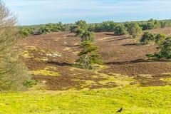 Mooi contrast van een droog land en een andere green met bomen in lijn en een zwarte vogel op het groene gras royalty-vrije stock foto's
