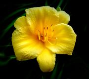 Mooi Daisy Yellow-bloemclose-up royalty-vrije stock foto