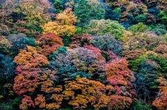 Mooi Dalingsgebladerte in Arashiyama, Kyoto, Japan Royalty-vrije Stock Fotografie