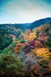 Mooi Dalingsgebladerte in de ochtendmist Arashiyama, Kyoto, Jap royalty-vrije stock afbeelding