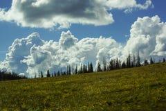 Mooi de boomlandschap van de wolkenweide stock afbeelding
