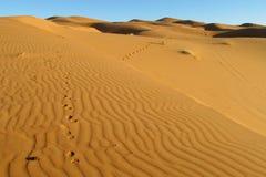 Mooi de duinenpanorama van de zandwoestijn in de woestijn van de Sahara stock afbeelding