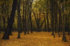 Mooi de herfstbos Royalty-vrije Stock Afbeeldingen