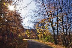 Mooi de herfstbos met zonnestraal en windende weg stock afbeeldingen