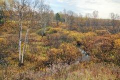 Mooi de herfstlandschap met een kleine rivier die onder bruine struiken en berkbomen stromen stock afbeeldingen