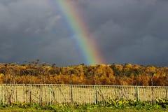 Mooi de herfstlandschap met een regenboog Stock Fotografie