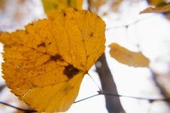 Mooi de herfstlandschap met gele bomen en bladeren stock foto