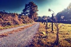 Mooi de herfstlandschap met landweg Stock Afbeelding