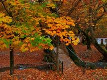 Mooi de herfstlandschap van Planitero in Kalavryta, Griekenland stock fotografie