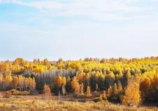 Mooi de herfstlandschap in zonnige dag Stock Foto