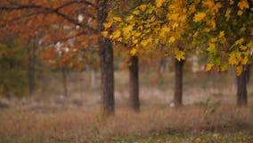Mooi de herfstpark stock videobeelden