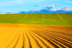 Mooi de lente geploegd gebied en groene weide en Ooievaar op gebied Royalty-vrije Stock Afbeeldingen