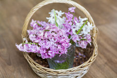 Mooi de lenteboeket van hyacinten in een houten mand Royalty-vrije Stock Foto