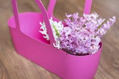 Mooi de lenteboeket van hyacinten in een roze mand Royalty-vrije Stock Afbeeldingen