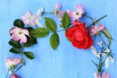 Mooi de Lentekader van bloemen op blauwe achtergrond Royalty-vrije Stock Afbeeldingen