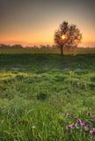 Mooi de lentelandschap Royalty-vrije Stock Foto