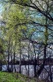 Mooi de lentelandschap Blauwe rivier en bomen op een zonnige dag na smeltende sneeuw royalty-vrije stock foto's