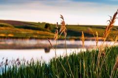 Mooi de lentelandschap, het meer in de ochtendmist Royalty-vrije Stock Fotografie
