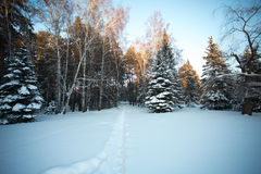 Mooi de winterbos royalty-vrije stock afbeeldingen