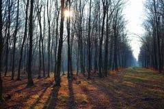 Mooi de winterbos met zonnestraal en lange schaduwen zonder sneeuw royalty-vrije stock foto