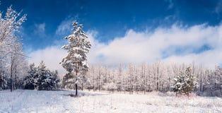 Mooi de winterlandscape Royalty-vrije Stock Afbeeldingen