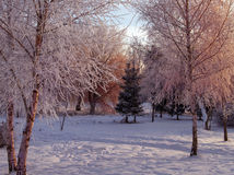 Mooi de winterlandscape Royalty-vrije Stock Foto's