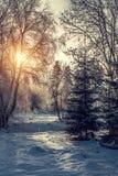 Mooi de winterlandscape Stock Afbeelding