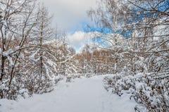 Mooi de winterlandscape Het stadspark is behandeld in sneeuw royalty-vrije stock foto