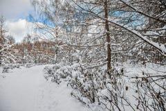 Mooi de winterlandscape Het stadspark is behandeld in sneeuw stock afbeelding