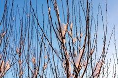 Mooi de winterlandscape Snow-covered takken van struiken in het licht van zonsondergang, kunnen als achtergrond of textuur worden stock fotografie