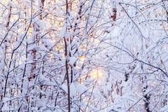 Mooi de winterlandscape Snow-covered takken van struiken in het licht van zonsondergang, kunnen als achtergrond of textuur worden stock foto