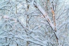 Mooi de winterlandscape Snow-covered takken van struiken in het licht van zonsondergang, kunnen als achtergrond of textuur worden stock afbeeldingen