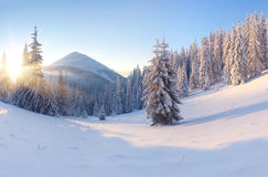 Mooi de winterlandschap Royalty-vrije Stock Foto