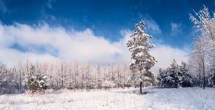 Mooi de winterlandschap 1 Stock Foto