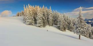 Mooi de winterlandschap in de bergen, de Karpaten, Transylv Stock Fotografie