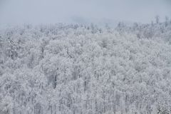 Mooi de winterlandschap in het bos Stock Afbeelding
