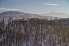 Mooi de winterlandschap in het bos royalty-vrije stock afbeeldingen