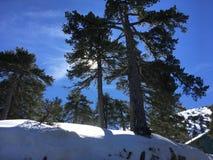 Mooi de winterlandschap met grote groene pijnbomen en zonneschijn en sneeuw stock illustratie