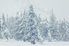 Mooi de winterlandschap met sneeuw behandelde bomen stock afbeeldingen