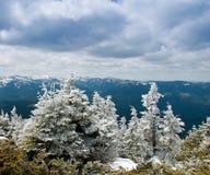 Mooi de winterlandschap met sneeuw behandelde bomen. Royalty-vrije Stock Foto